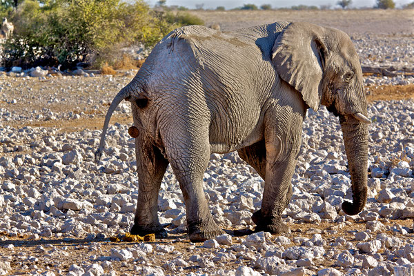 NAMIBIA - ANIMALS 24