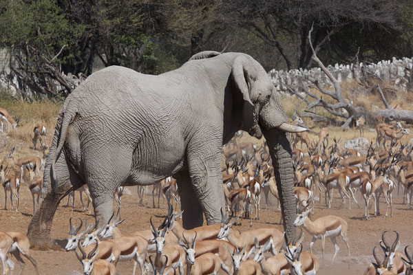 NAMIBIA - ANIMALS 09