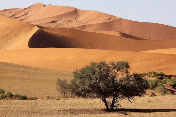 NAMIBIA - LANDSCAPES 44