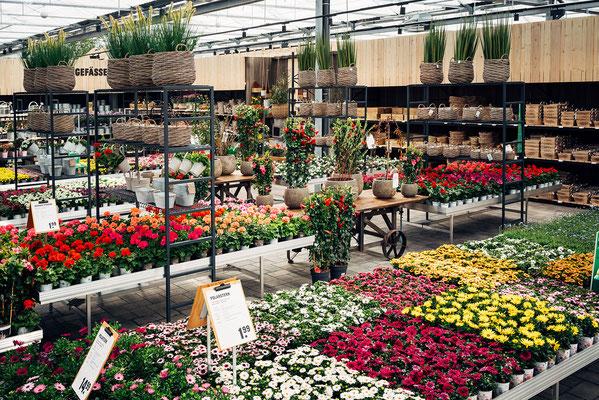 Wienss Innenausbau GmbH - Innenausbau, Objektbau, Museumsbau - hier: Gartenmuseum Lennestadt - www.wienss-innenausbau.de - Ansicht Blumen und mehr