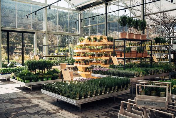 Wienss Innenausbau GmbH - Innenausbau, Objektbau, Museumsbau - hier: Gartenmuseum Lennestadt - www.wienss-innenausbau.de - Ansicht Pflanzen und Gehölze
