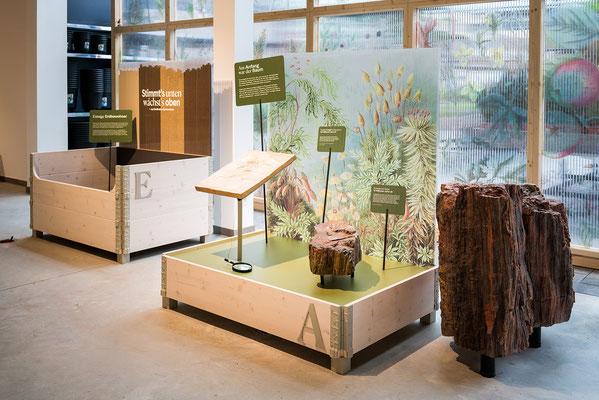 Wienss Innenausbau GmbH - Innenausbau, Objektbau, Museumsbau - hier: Gartenmuseum Lennestadt -www.wienss-innenausbau.de - Hochbeete Ansicht - 15 Mio. alter versteinerter Baum