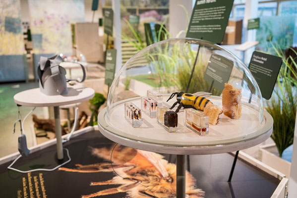 Wienss Innenausbau GmbH - Innenausbau, Objektbau, Museumsbau - hier: Gartenmuseum Lennestadt - Miniaturwelten, Gartendetail in h0 -www.wienss-innenausbau.de - kleine Biene ganz groß