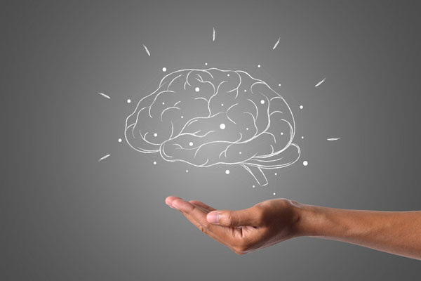 plasticité neuronale