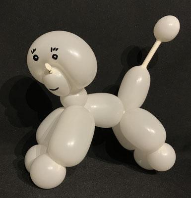 Ballon Pudel