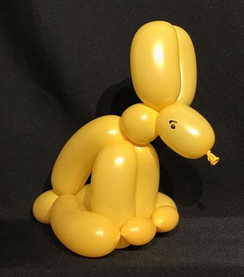 Ballon Hase
