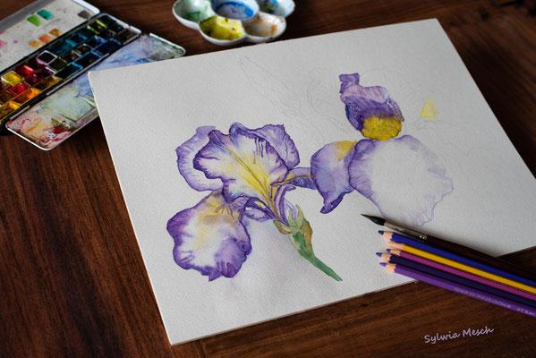 Iris, Aquarellbild