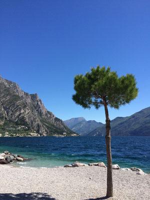 Limone sul Garda ist eine italienische Gemeinde am Westufer des Gardasees in der Provinz Brescia in der Lombardei