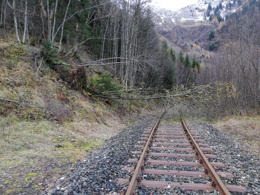 Im Bereich des Reichensteinweges gab es auch zahlreich umgestürzte Bäume zu beklagen.