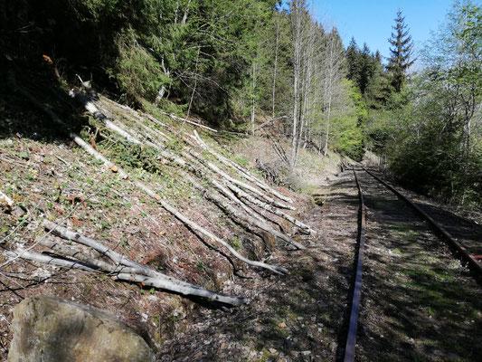 Auf der Böschung wurde das Schadholz säuberlich abgelegt.