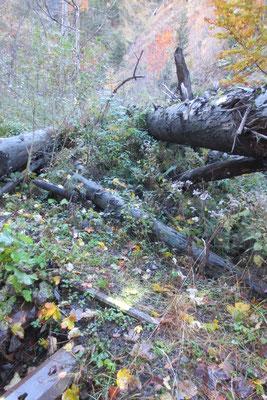 II. Sauerbrunngraben, km 5,852; Ausgangssituation Oktober 2015