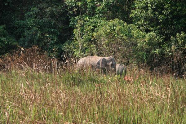 Indische Elefantenmama mit Kind