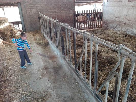 Raphael hilf auf dem Bauernhof
