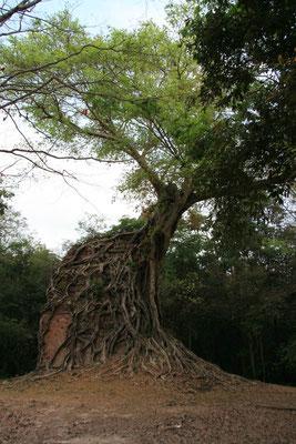 Wenn Bäume sich die Welt zurückholen