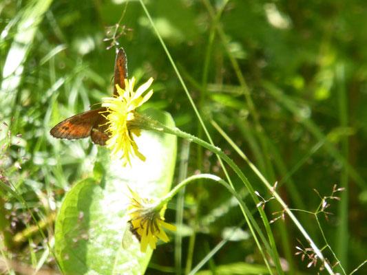 Schmetterling beim Frühstück