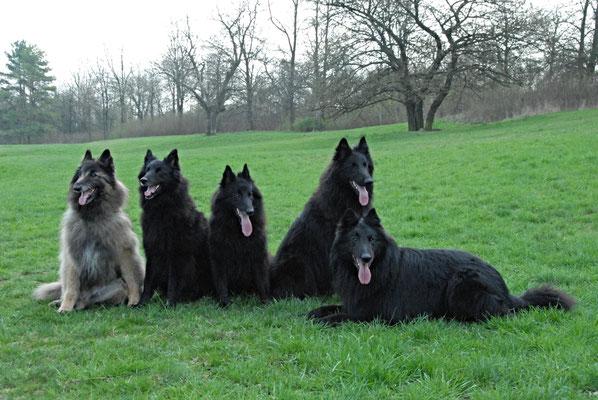 Aiko, Akira, Aimy, Flam und Lara
