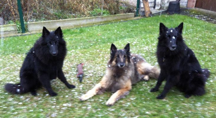 Aimy, Lara und Akira