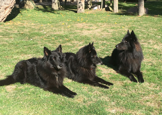 Caesar, Akira und Aimy 2018