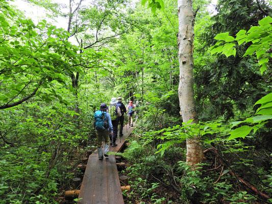 森の中も木道で整備されている箇所があります。