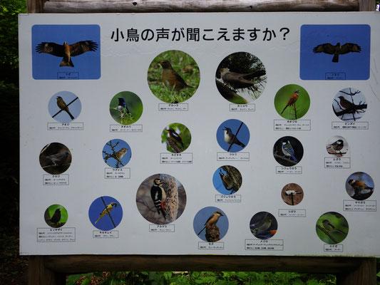 玉原高原で見られる鳥達はこれくらいいるそうです。