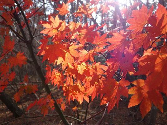 秋を満喫。