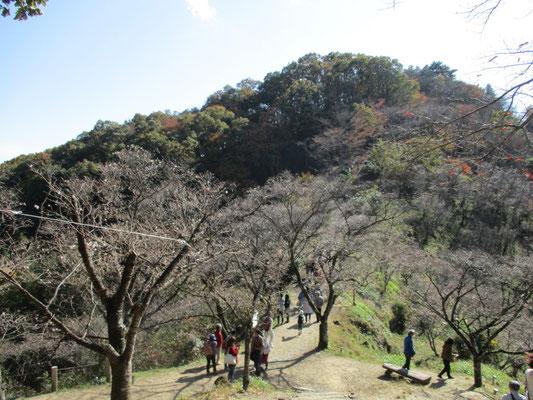 山頂の桜山まではもう少し。