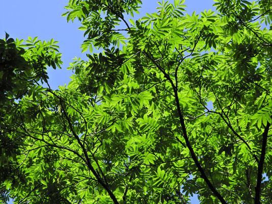緑がとても綺麗!