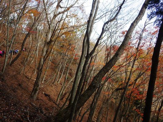 ほとんどの木々が落葉してました。