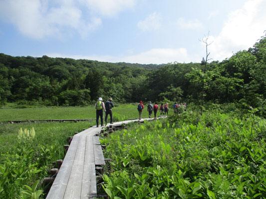 湿原内は木道で整備されています。