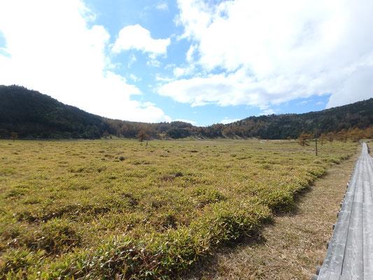 秋の池の平湿原も広々していて素敵でした。
