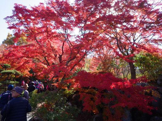 紅葉がとても綺麗でした。