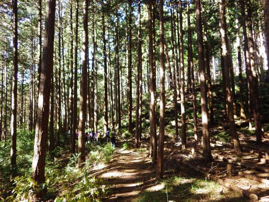間伐もされている山なので、整備されたコースです。