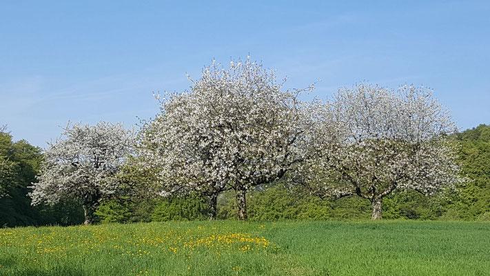 und auf die blühenden Bäume