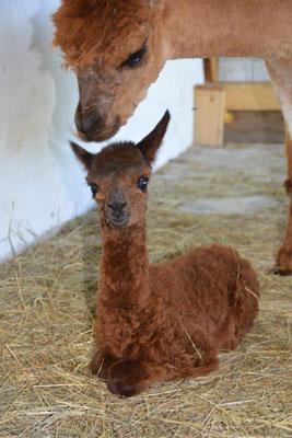 ...und am 3. Sonntag in Folge hat uns Sahar mit ihrer wunderschönen Tochter Shakira überrascht!