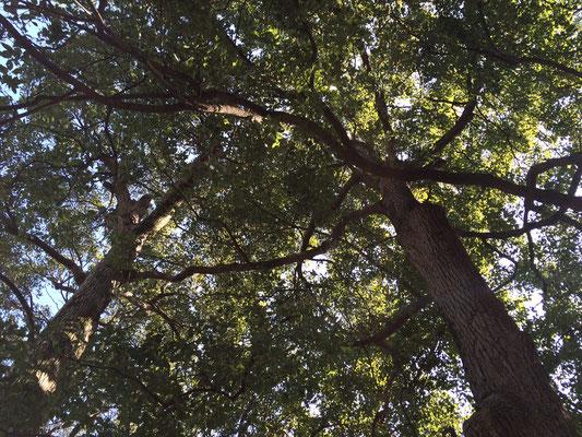 連理の枝写真1