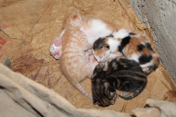 Die vier Jungen 13 Tage alt