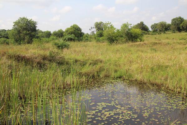 18. Landschaft bei Come Benin.