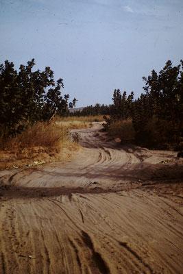 31. Piste zwischen Tambacounda (Senegal) und Kayes