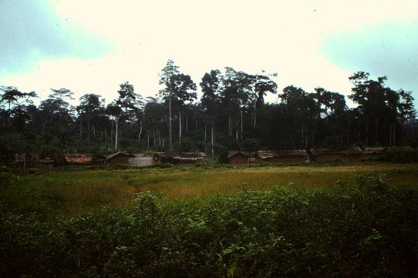 19. Dorf zwischen Abengourou und Abidjan.