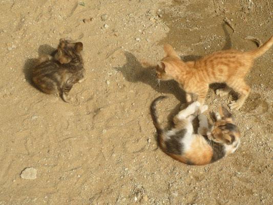 Unsere 4 Katzen am 26.12.2017