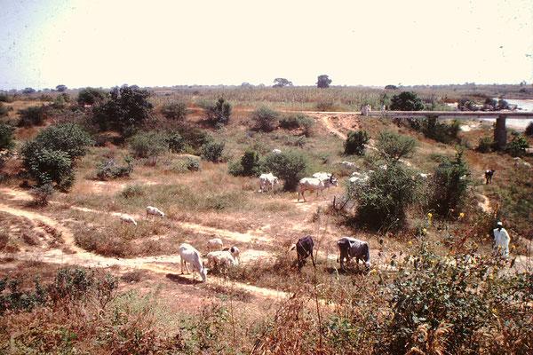 John. F. Kennedy Brücke in Niamey