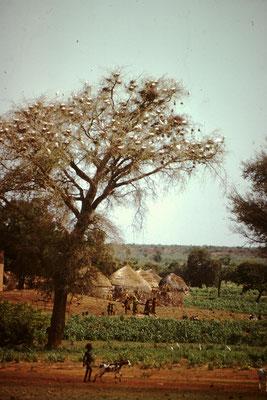 Landschaft zwischen Niamey und Birni Nkonni