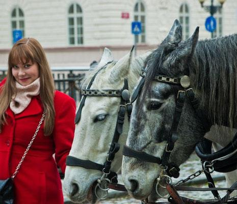 Лошадки у Млынской колоннады