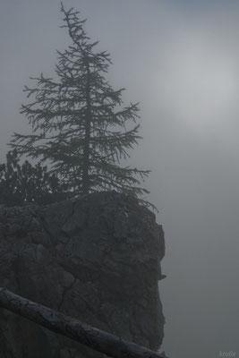 Карликовое деревце на утесе