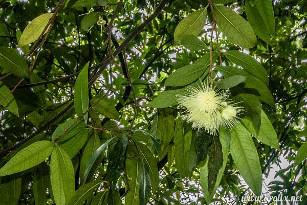 ...и неведомые плоды на деревьях.