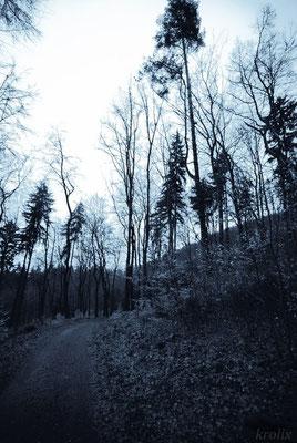 Карлаварские лесные тропы