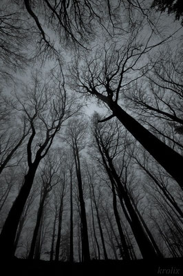 Голые деревья в ч/б
