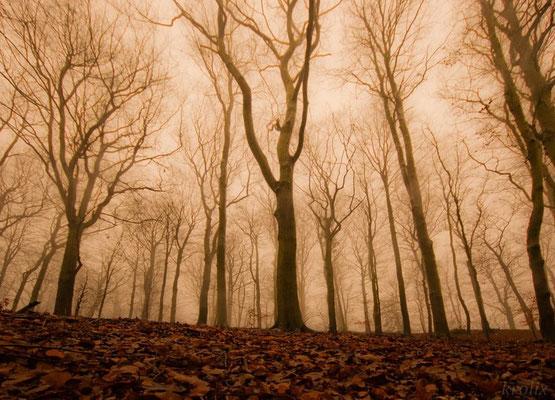 Голые деревья в сепии