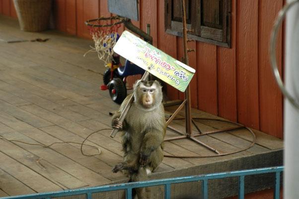 """Табличка гласит: """"Я хочу сбежать отсюда! (тайск.) Меня зовут Кай-тонг (англ.)"""""""