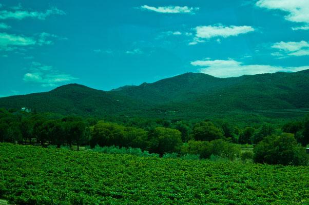 Насколько хватает взгляда, земля покрыто деревьями и виноградниками
